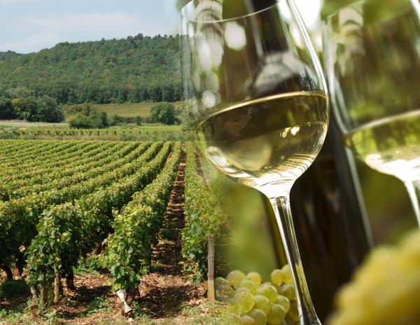 vin-bourgogne-vigne